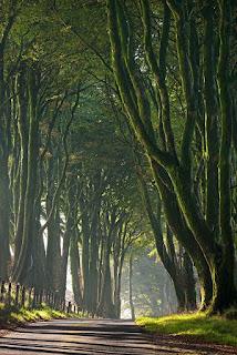 berbaris pohon di pinggir jalan