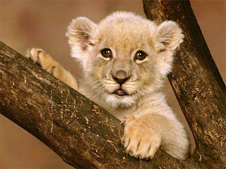 Baby Animals Cute Animals