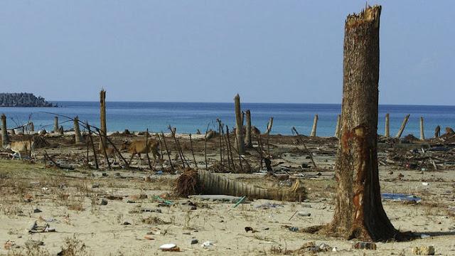 Найдена древнейшая жертва цунами