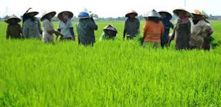 Ada Penyuluhan Jadi UPTD Pertanian