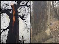 Video Menakutkan Dari 'Pohon Iblis'