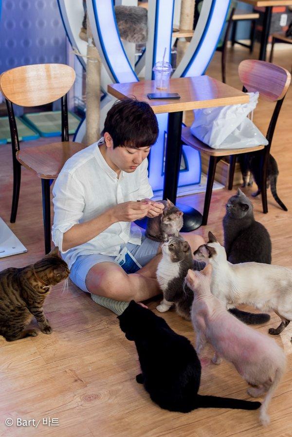 seoul south korea cats attic