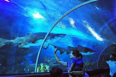 Sea World Ancol Jakarta