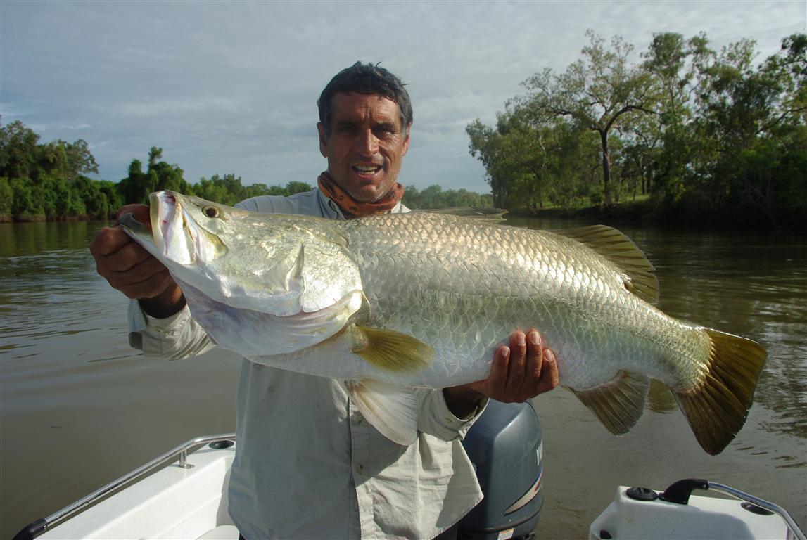 Barramundi Fisch