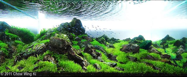 foto aquascape yang unik cantik dan menarik