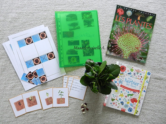|| Nos projets d'activités pour étudier la botanique