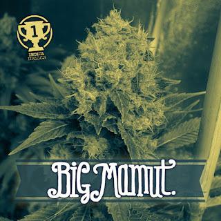 Big Mamuth
