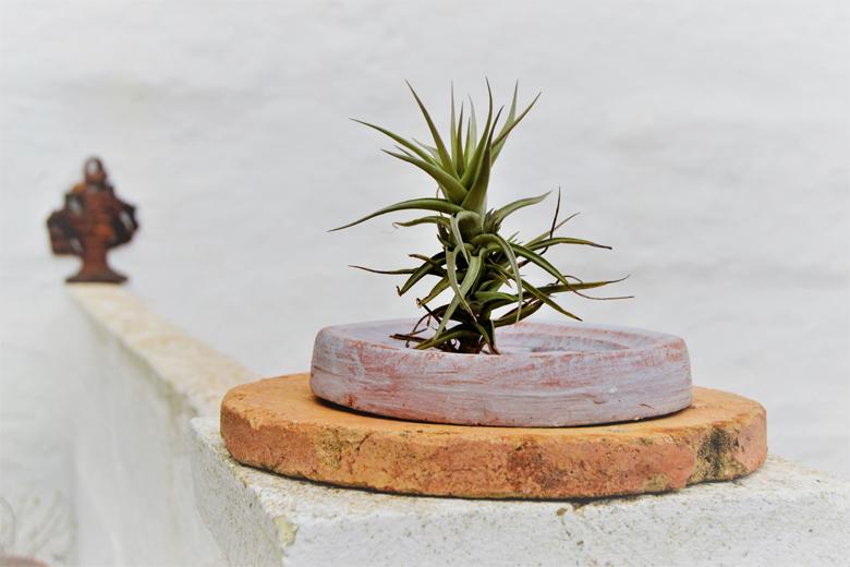 Presentación de bonus exclusivos, junto con la compra de mi Ebook, Cómo cuidar tus Plantas, incluyo dos regalos irresistibles