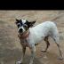Proprietária de animal de estimação desaparecida pede ajuda para encontrá-la