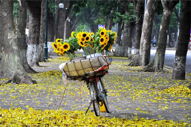 """A series of """"utopian"""" photos about Vietnam on foreign magazines makes you want to explore 7"""