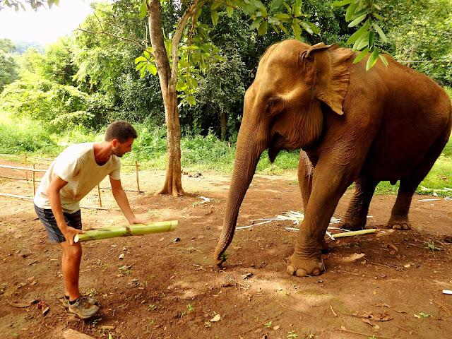 voluntariado elefantes sudeste asiatico