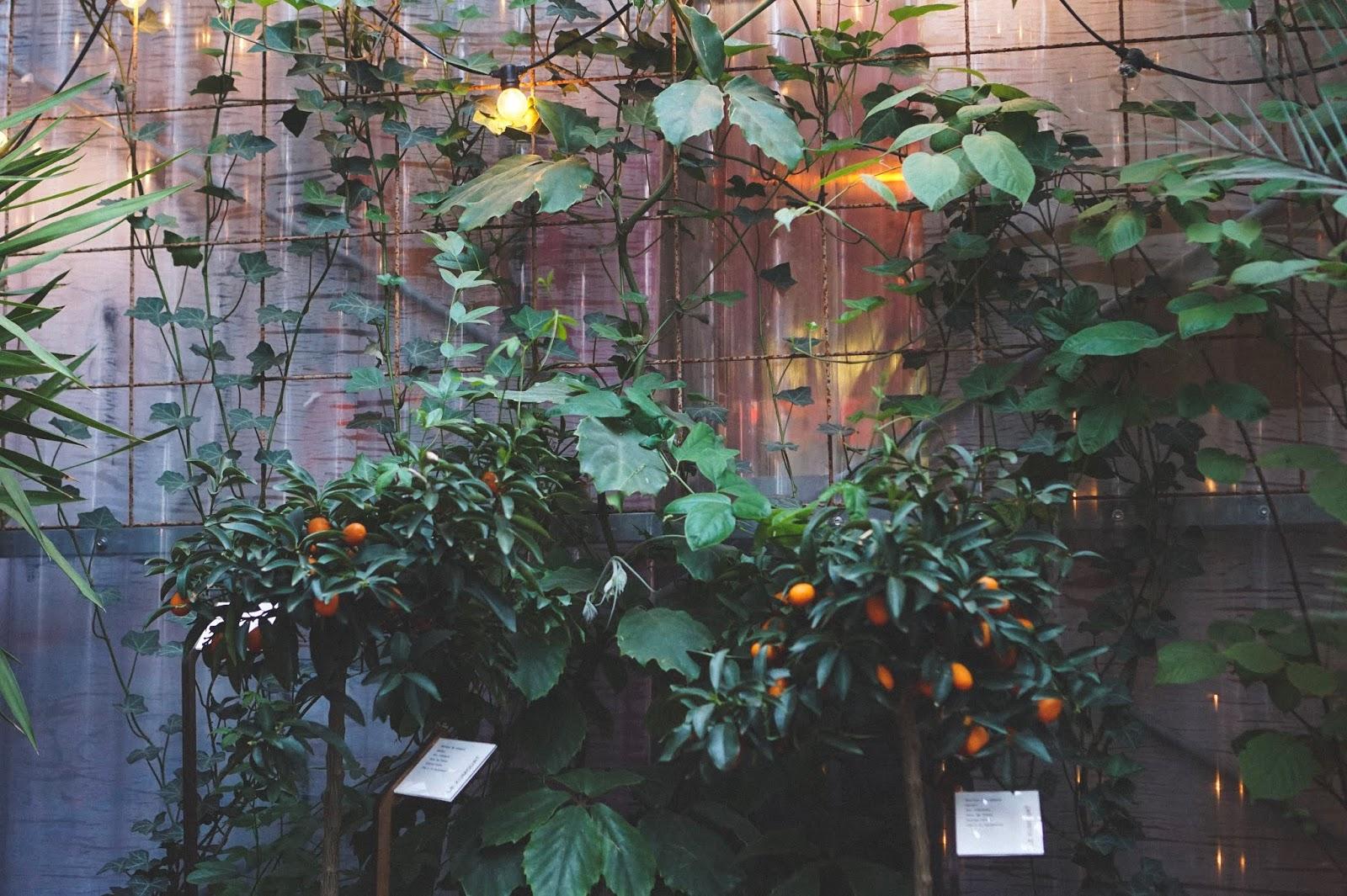 Plant Based Detroit Vegan Paris Guide