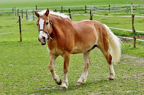 horse classification paper The scoop walking horse paper is your online center for all news and events in the exciting world of the walking horse.