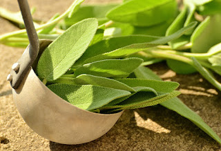 Herbal, Herbal Plant, sage, sage herbs, sage benefits, sage leaves, sage uses, sage nutrition, sage tea,