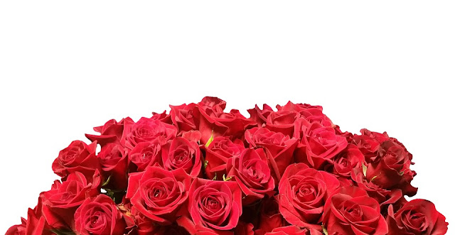 red-roses-images-hd
