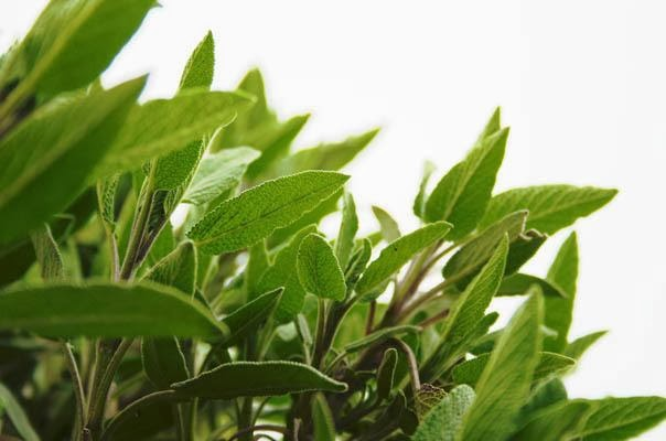 Sage - The Relieve For Cold & Respiratory Infections