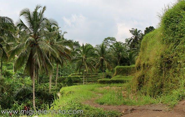 Tegalalang-Rice-Terrace-tranquilidad