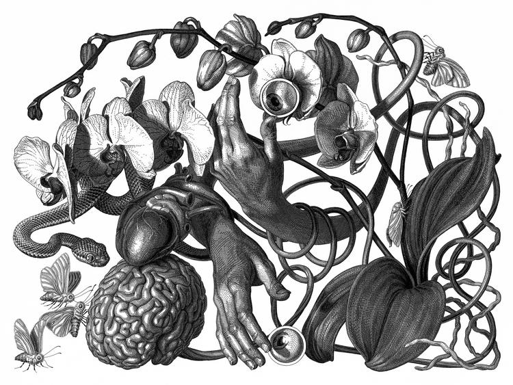 15-Blind-Olivia-Knapp-Cross-Hatch-Drawings-with-a-bit-of-Anatomy-www-designstack-co