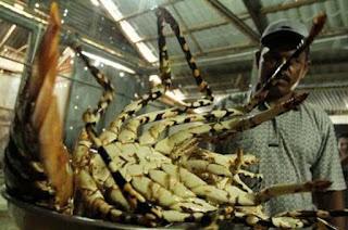 cara mengolah lobster kecil,cara mengolah lobster laut,cara mengolah lobster air tawar,cara memasak lobster asam manis,cara mengolah lobster yang enak,cara mengolah lobster goreng,