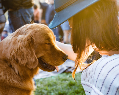 The owner's behavior: The elusive puzzle piece in dog-human relationships