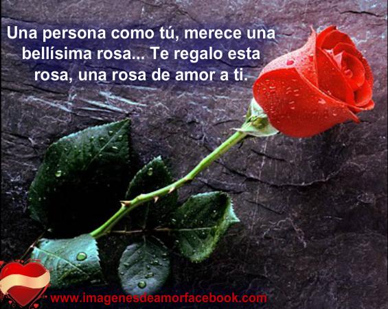 Rosas Rojas Y Blancas Con Frases De Amor