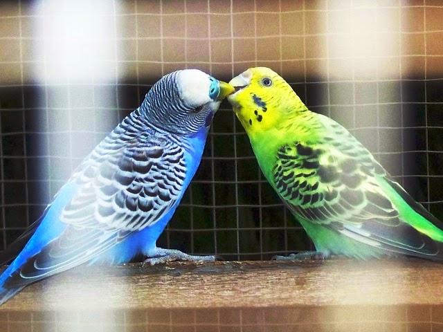 Harga Burung September 2013 Daftar Harga Burung 2013 Selamat Datang Di Langkah Tipspetaniblogspot201501aneka Macam Warna Burung Parkithtml
