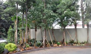 Galeri Taman - Tukang Taman Surabaya 69