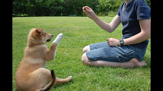 Consejos de entrenamiento comprobado para perros