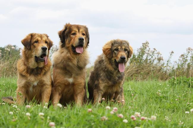 Psy i udary słoneczne