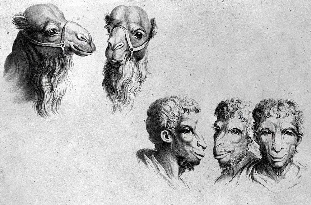 05-Camel-Animal-Transformations-Drawings-from-the-1600s-www-designstack-co