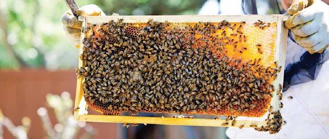 Συνέδριο επαγγελματικής μελισσοκομίας στα Γιάννενα