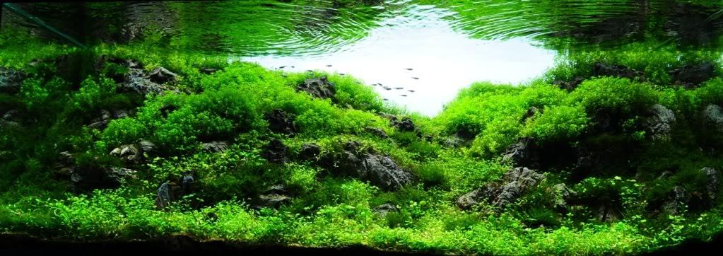 trân châu nhật tạo cảnh quan tự nhiên