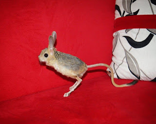 Jual Jerboa,  Harga Jerboa,  Toko Jerboa,  Diskon Jerboa,  Beli Jerboa,  Review Jerboa,  Promo Jerboa,  Spesifikasi Jerboa,  Jerboa Murah,  Jerboa Asli,  Jerboa Original,  Jerboa Jakarta,  Jenis Jerboa,  Budidaya Jerboa,  Peternak Jerboa,  Cara Merawat Jerboa,  Tips Merawat Jerboa,  Bagaimana cara merawat Jerboa,  Bagaimana mengobati Jerboa,  Ciri-Ciri Hamil Jerboa,  Kandang Jerboa,  Ternak Jerboa,  Makanan Jerboa,  guppy breeding Jerboa,  guppies for sale Jerboa,  guppy care Jerboa,  breeding guppiesJerboa,  male guppiesJerboa,  female guppiesJerboa,  guppy aquariumJerboa,  baby guppiesJerboa,  poecilia reticulataJerboa,  guppy tankJerboa,  guppy fryJerboa,  guppy giving birthJerboa,  how long do guppies liveJerboa,  guppysJerboa,  guppy guppyJerboa,  guppy foodJerboa,  guppy breeding tankJerboa,  fantail guppyJerboa,  guppy breedsJerboa,  guppy sJerboa,  wild guppiesJerboa,  guppy babiesJerboa,  guppy varietiesJerboa,  freshwater guppies Jerboa,  guppy female Jerboa,  tropical guppies Jerboa,  female guppies for saleJerboa,  guppy priceJerboa,  raising guppiesJerboa,  guppies for sale onlineJerboa,  guppy infoJerboa,  buy guppies onlineJerboa,  guppy saleJerboa,  buy guppiesJerboa,  guppy diseasesJerboa,  guppies onlineJerboa,  caring for guppiesJerboa,  best food for guppiesJerboa,  food for guppiesJerboa,  blue guppyJerboa,  guppy breeding setupJerboa,  guppy birthJerboa,  guppy speciesJerboa,  gestation period for guppiesJerboa,  guppys onlineJerboa,  guppy care sheetJerboa,  guppy blue  Jakarta,  keeping guppies  Bandung,  guppies for sale cheap  Medan,  the guppy  Bali,  guppy breeding cycle  Makassar,  show guppies  Jambi,  thai guppy  Pekanbaru,  male and female guppies  Palembang,  what to feed baby guppies  Sumatera,  yellow guppy  Langsa,  guppy names  Lhokseumawe,  guppy gestation period  Meulaboh,  feeding guppies  Sabang,  guppy genetics  Subulussalam,  guppy show  Denpasar,  turquoise guppy  Pangkalpinang,  guppy fry care  Cilegon,  guppy games  Serang,  guppy gestation  Tangerang Selatan,  guppy colors  Tangerang,  guppy tank setup  Bengkulu,  trinidadian guppies  Gorontalo,  guppies having babies  Kota Administrasi Jakarta Barat,  guppy strains  Kota Administrasi Jakarta Pusat,  what do guppies eat  Kota Administrasi Jakarta Selatan,  what to feed guppies  Kota Administrasi Jakarta Timur,  guppy life span  Kota Administrasi Jakarta Utara,  how to care for guppies  Sungai Penuh,  guppy male and female  Jambi,  what is a guppy  Bandung,  guppy natural habitat  Bekasi,  german guppy  Bogor,  guppy poecilia reticulata  Cimahi,  guppy images  Cirebon,  images of guppies  Depok,  fishguppy  Sukabumi,  guppy facts  Tasikmalaya,  how many babies do guppies have  Banjar,  how big do guppies get  Magelang,  how to take care of guppies  Pekalongan,  fan tailed guppies  Purwokerto,  guppy pregnant  Salatiga,  guppy life cycle  Semarang,  temperature for guppies  Surakarta,  what are guppies  Tegal,  guppies restaurant  Batu,  guppy definition  Blitar,  guppy meaning  Kediri,  guppy size  Madiun,  define guppy  Malang,  guppy wiki  Mojokerto,  how do guppies give birth  Pasuruan,  baby guppys  Probolinggo,  guppies bar  Surabaya,  how many fry do guppies have  Pontianak,  guppy behavior  Singkawang,  how many babies does a guppy have  Banjarbaru,  where do guppies come from  Banjarmasin,  how do guppies reproduce  Palangkaraya,  what does guppy mean  Balikpapan,  what is guppy  Bontang,  types of guppy  Samarinda,  guppy guppies  Tarakan,  guppy house hours  Batam,  guppys on the go  Tanjungpinang,  guppys restaurant  Bandar Lampung,  guppies definition  Kotabumi,  do guppies eat their babies  Liwa,  gestation guppy  Metro,  bubble guppies  Ternate,  guppy  Tidore Kepulauan,  Jerboa  Ambon,  Jerboa  Tual,  Jerboa  Bima,  Jerboa  Mataram,  Jerboa  Kupang,  Jerboa  Sorong,  Jerboa  Jayapura,  Jerboa  Dumai,  Jerboa  Pekanbaru,  Jerboa  Makassar,  Jerboa  Palopo,  Jerboa  Parepare,  Jerboa  Palu,  Jerboa  Bau-Bau,  Jerboa  Kendari,  Jerboa  Bitung,  Jerboa  Kotamobagu,  Jerboa  Manado,  Jerboa  Tomohon,  Jerboa  Bukittinggi,  Jerboa  Padang,  Jerboa  Padangpanjang,  Jerboa  Pariaman,  Jerboa  Payakumbuh,  Jerboa  Sawahlunto,  Jerboa  Solok,  Jerboa  Lubuklinggau,  Jerboa  Pagaralam,  Jerboa  Palembang,  Jerboa  Prabumulih,  Jerboa  Binjai,  Jerboa  Medan,  Jerboa  Padang Sidempuan,  Jerboa  Pematangsiantar,  Jerboa  Sibolga,  Jerboa  Tanjungbalai,  Jerboa  Tebingtinggi,  Jerboa  Yogyakarta,