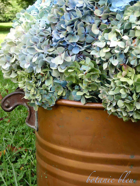 Wood handles on antique copper pot contrast with beautiful blue hydrangeas