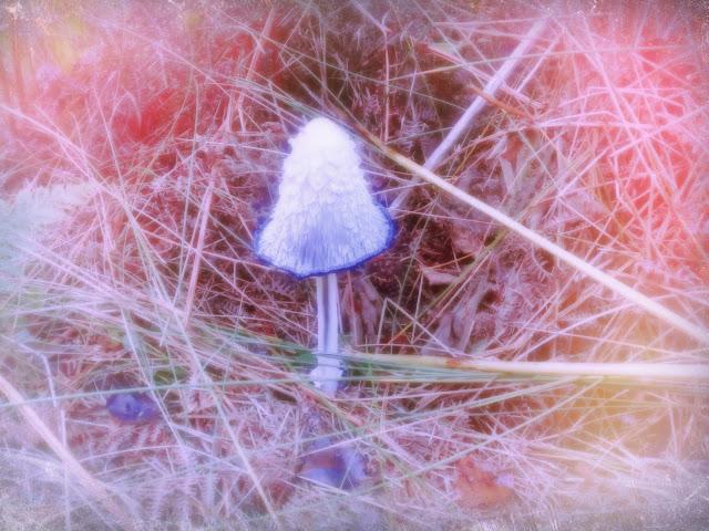 epping forest mushroom