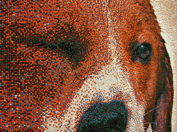 beagle portrait made of candy nonpareils, detail