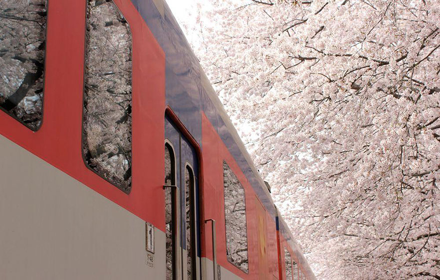 A train passing by in spring