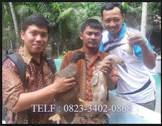 AGEN NASA DI Samudera Aceh Utara - TELF 082334020868