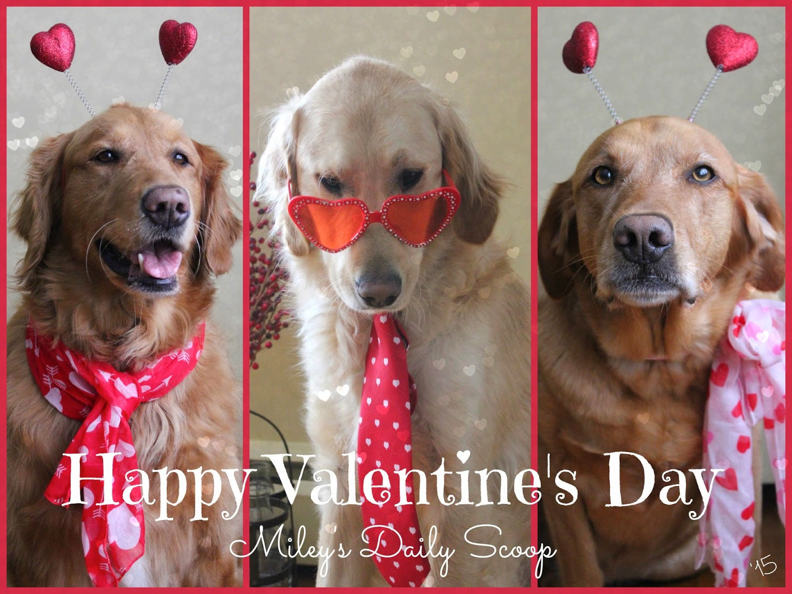 dogs dressed up for valentine's day