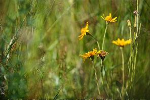 nature bio phytodia