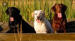 Perbedaan tiga anjing di life after