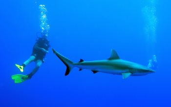 Wallpaper: Diving with Sharks