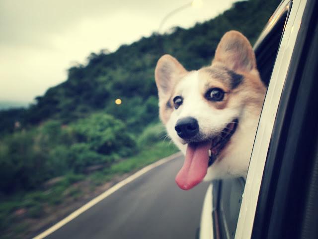 Висунути голову з вікна машини та уявити, наче летиш