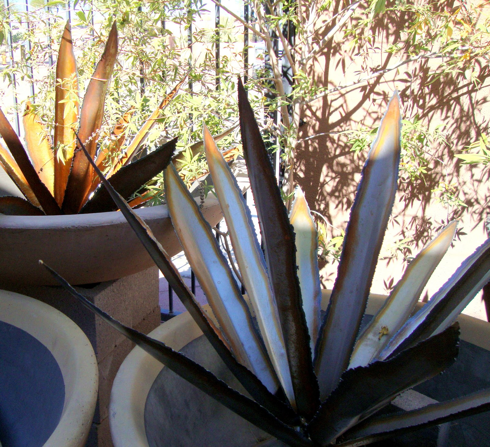 Danger Garden Desert Gardens Nursery Phoenix Az