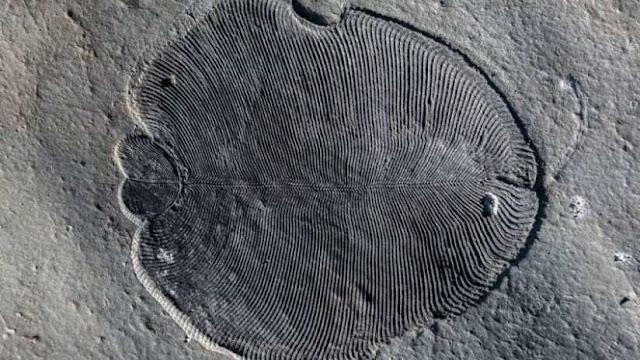 Descubren cómo en realidad se veían los animales más antiguos del planeta