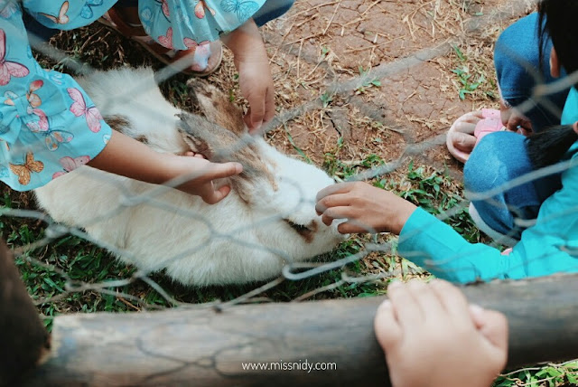 feeding rabit at the ranch puncak