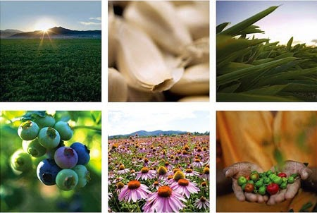 Amway Nutrilite luôn mang đến cho con người những sản phẩm bổ sung dinh dưỡng