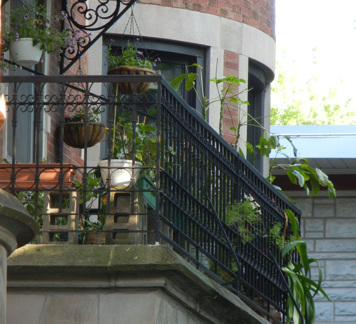 Chain-Link Trellis: Balcony and Fire Escape Gardening