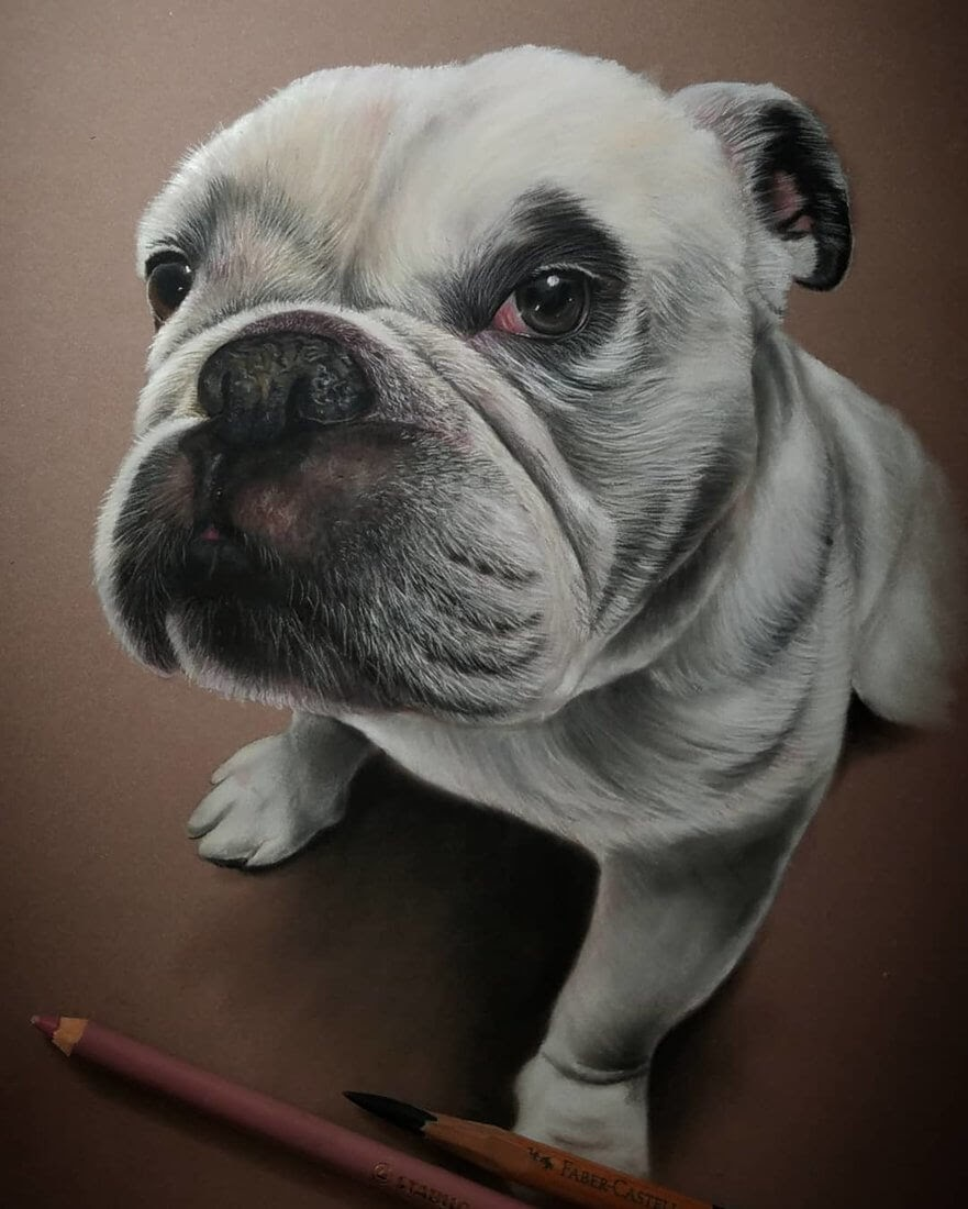 11-Dog-English-Bulldog-Rene-Lopez-Animal-Pencil-and-Pastel-Portrait-Drawings-www-designstack-co