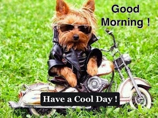 funny dog in bike good morning image